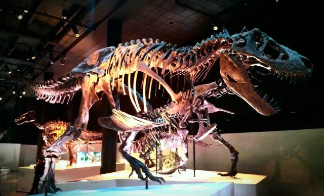 Amazing T-Rex at the Houston Museum of Natural Science.